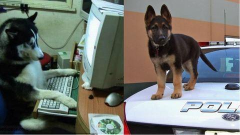 20 kutya, aki tökéletes munkaerő lehetne – vicces képek