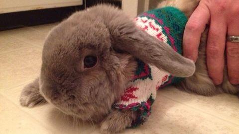 Állatok, akik csinosabbak a karácsonyi pulcsiban, mint te valaha leszel