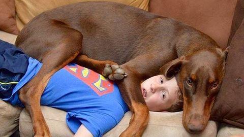 Ők a világ legszemtelenebb kutyái – fotók