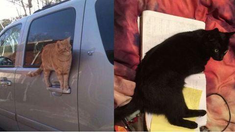 16 őrült macskás fotó, amin jól szórakozhatsz, amíg nézegeted őket