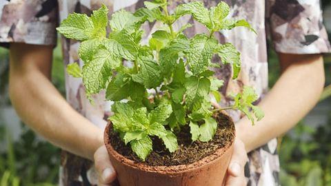Harcolj a betegségek ellen növényekkel