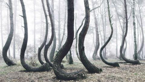 Misztikus fotók Európa legtitokzatosabb erdejéről – képek