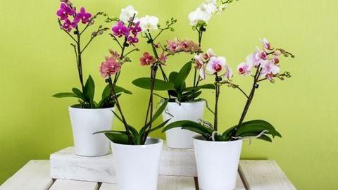 Így gondozd az orchideát télen