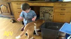 A kisfiú vizet adna a kutyának, de nem jött össze - vicces videó
