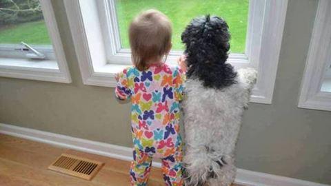 Kevesebbet szoronganak a kutyás kisgyerekek