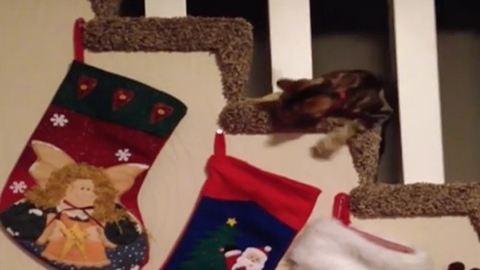 Karácsonyi cica, aki azt hiszi, övé az ajándék
