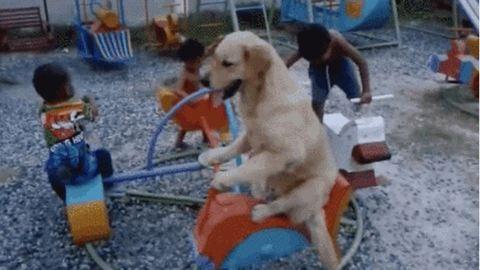 Gyerekekkel körhintázik a cuki golden retriever a játszótéren – videó