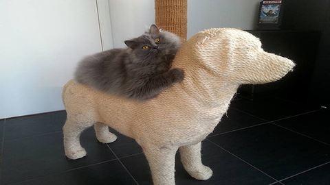 Kutya alakú bábukon vezethetik le a feszültséget a macskák