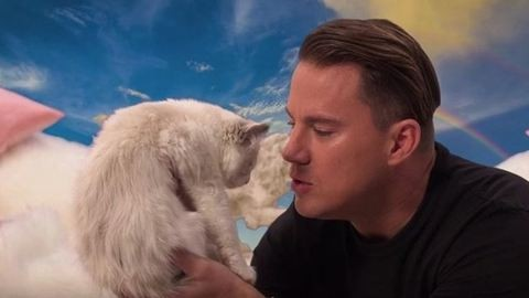 Channing Tatum akkor is imádni való, ha porig aláz egy macskát – videó