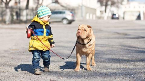 Ezért érdemes kutyát venni a gyereknek