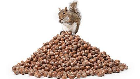 3 meglepő dolog, ami benned történik, ha túl sok mogyorót eszel