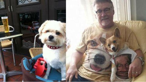 13 csalhatatlan jel, hogy a kutyáddal élsz kapcsolatban – képek
