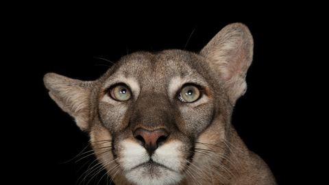 Az összes veszélyeztetett állatfajt meg akarja örökíteni egy amerikai fotós