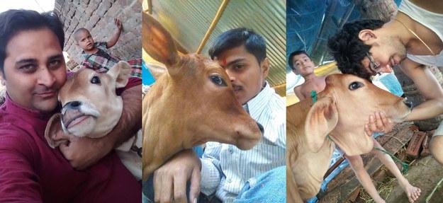 Tehenekkel szelfizni most a menő Indiában