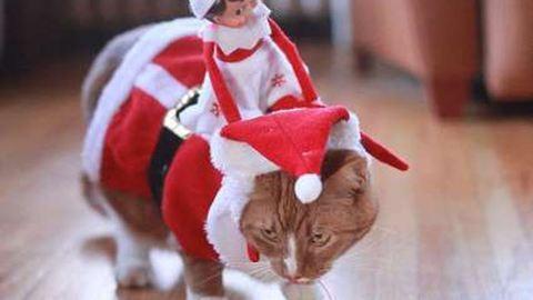 5 vicces karácsonyi baklövés