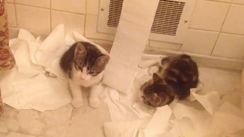 Napi cuki: cicák a vécépapírral