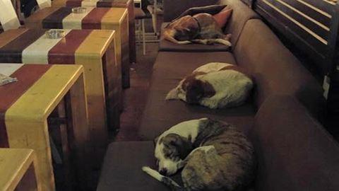 Éjszakára kutyamenhellyé változik a kávézó