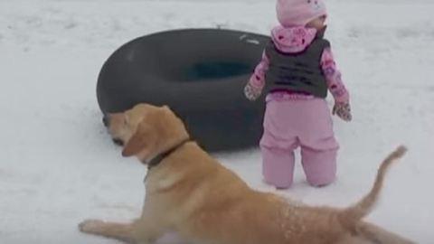 A lejtőn csúszás királya ez a kutya – vicces videó