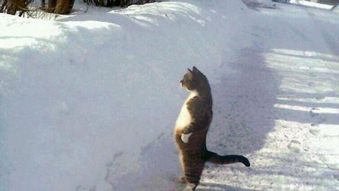 15 jeges és havas gif, amit ha megnézel, garantáltan mosolyogni fogsz