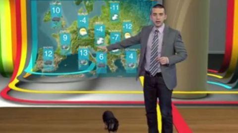 Kutyás baki az RTL Klub időjárás-jelentésében – videó