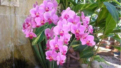 Így öntözd az orchideád! – videó