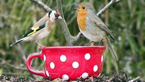 Életmentő: havazás idején etesd a madarakat!