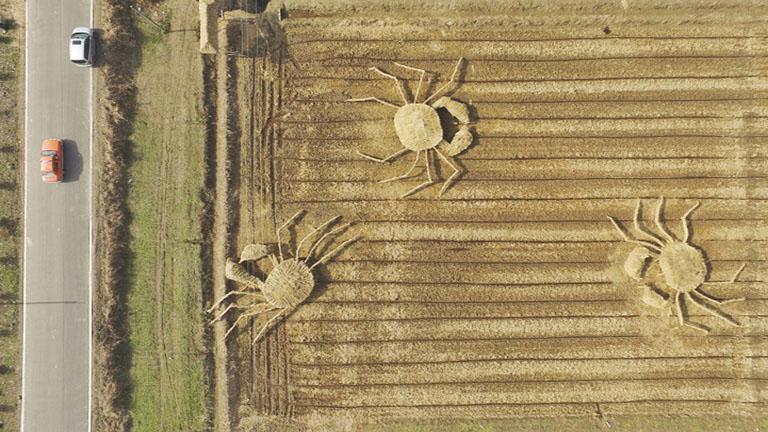 Hatalmas szénarákokkal hívják fel a figyelmet a légszennyezésre a farmerek
