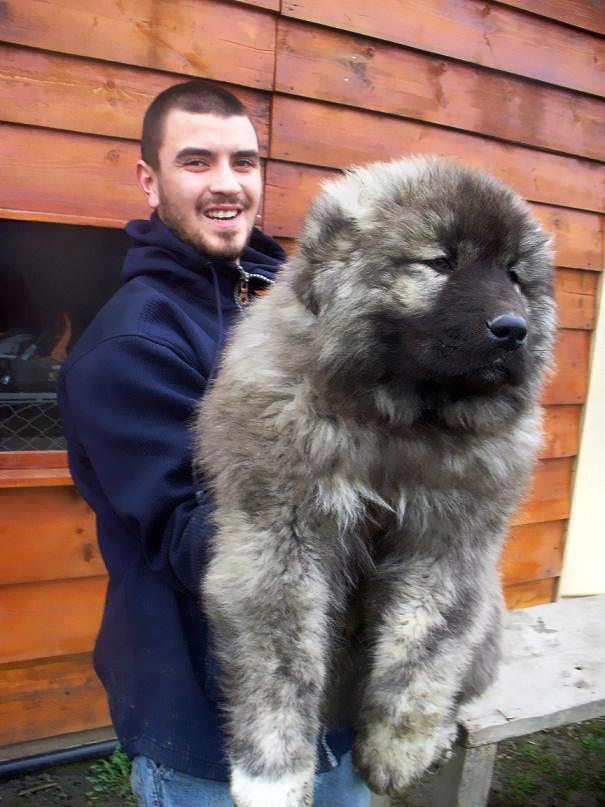 15 kutya, aki medvének néz ki, és megdobogtatja a te szívedet is - cuki fotók