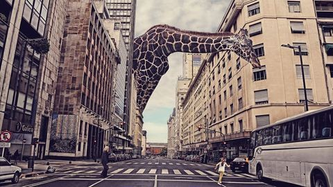 Óriás zsiráf grasszál Buenos Airesben – a Sony World Photography döntős képei
