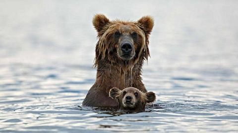 12 megható szülő-gyerek fotó az állatvilágból