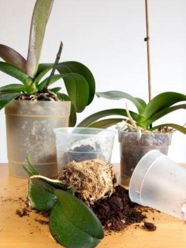 Az orchidea jól érzi magát a műanyag lyukacsos cserépben