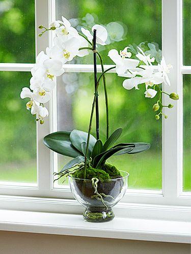 Az orchidea jól érzi magát az ablakban