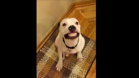 Nincs fotogénebb a vigyorgó kutyánál – vicces videó
