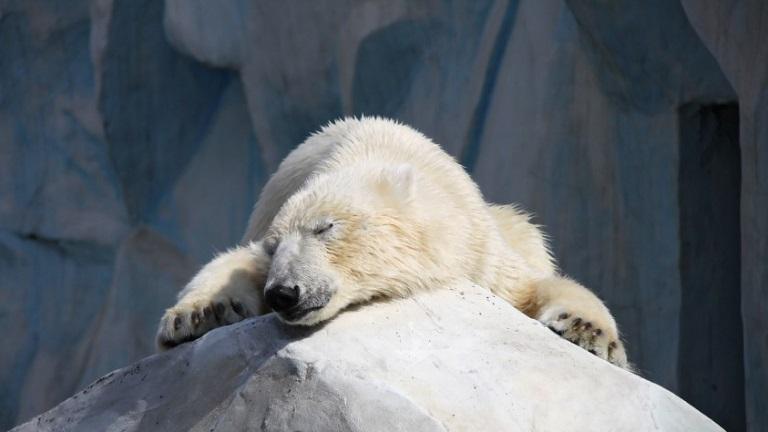 Prozacot szednek az állatkerti jegesmedvék