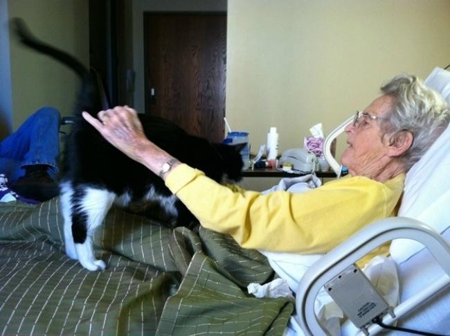 17 szívmelengetően megható macskás fotó