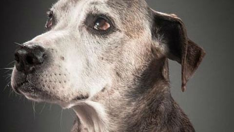 Idősek otthona épül kutyáknak Nagykátán