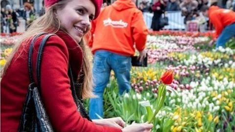 Hollandiában elindult a tulipánszezon