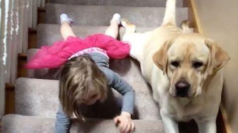 Együtt csúszott le a lépcsőn a kislány és cuki kutyája – videó