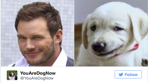 Ez a Twitter-oldal megtalálja a benned rejlő kutyát