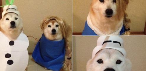 Ezek a jelmezes shiba inu kutyák megcsinálják a napod – vicces képek