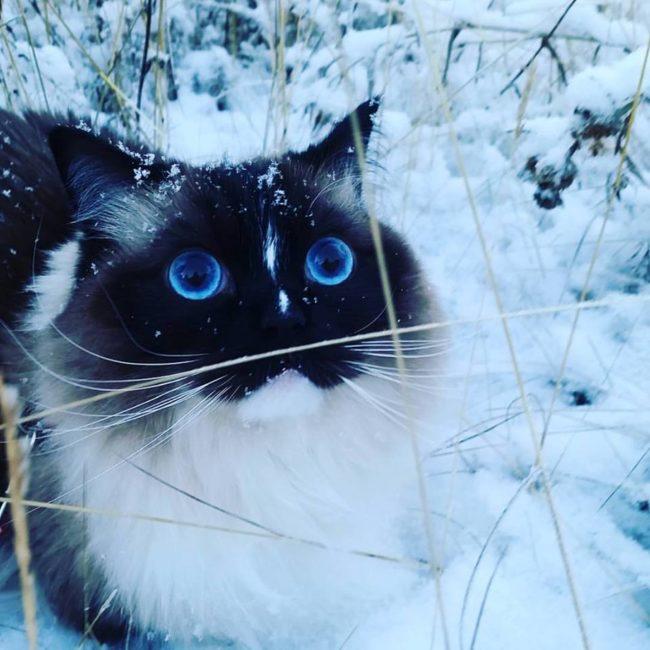 20 állat, aki úgy örül a havazásnak, hogy azt muszáj megnézned - vicces képek