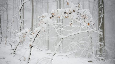 Kifehéredett az ország – gyönyörű havas fotók