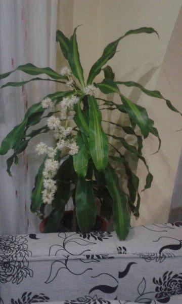 Ritkán virágzó csodálatos növények