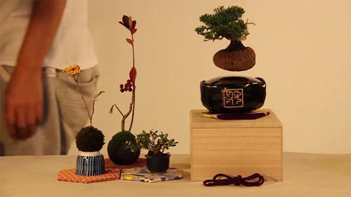 Dekoráld otthonodat lebegő bonsai fákkal
