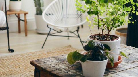 Szobanövényvédő házi praktikák