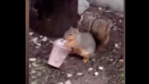 Imádja a milkshaket ez a mókus – videó