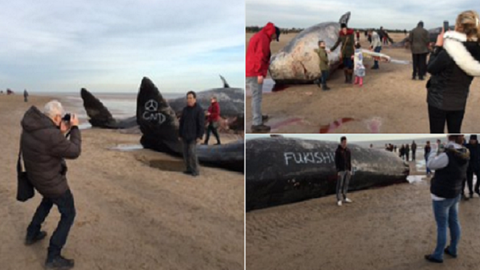 Partra vetett bálnák tetemeivel fotózkodnak az emberek – sokkoló képek