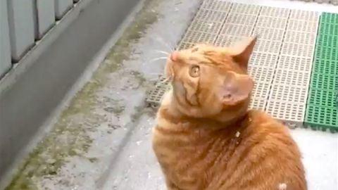 Cuki videó: ezt a kiscicát teljesen lenyűgözte a hóesés