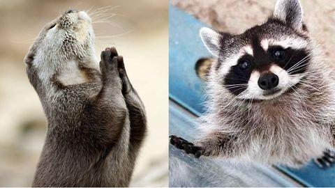 20 állat, aki úgy tud könyörögni, hogy nem tudsz nekik ellenállni – cuki fotók