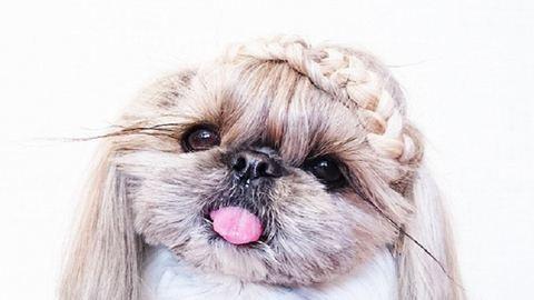 Mindennap új frizurát kap ez a kutya – cuki képek
